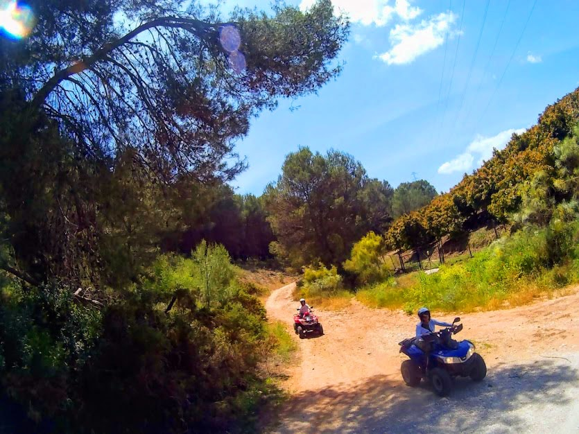 two quads riding amongst trees