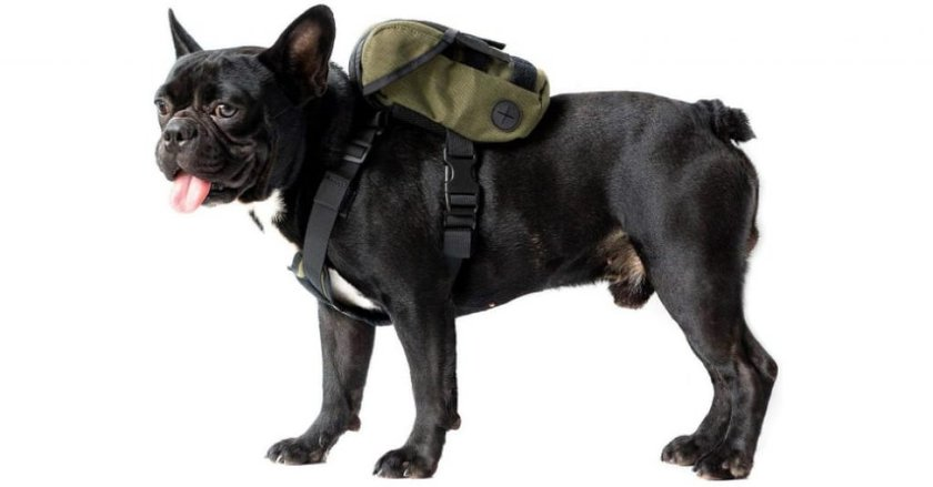 OneTigris Dog Backpack