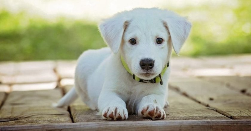 barking collar for small dog