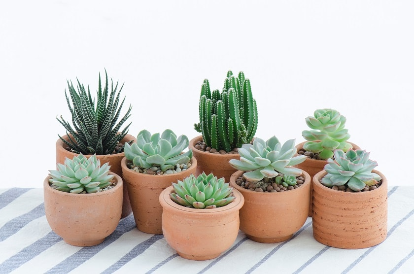 Diese kleinen Sukkulenten wurden bereits eingepflanzt.