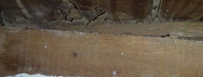 Vigas madera afectadas por plaga de termitas en Burguillos, Sevilla