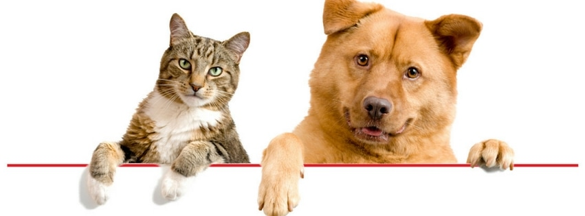 Dog And Cat Vaccination Schedule