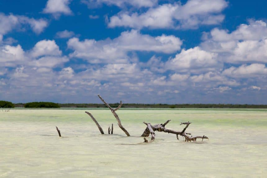 Unspoiled nature on island Holbox, Mexico