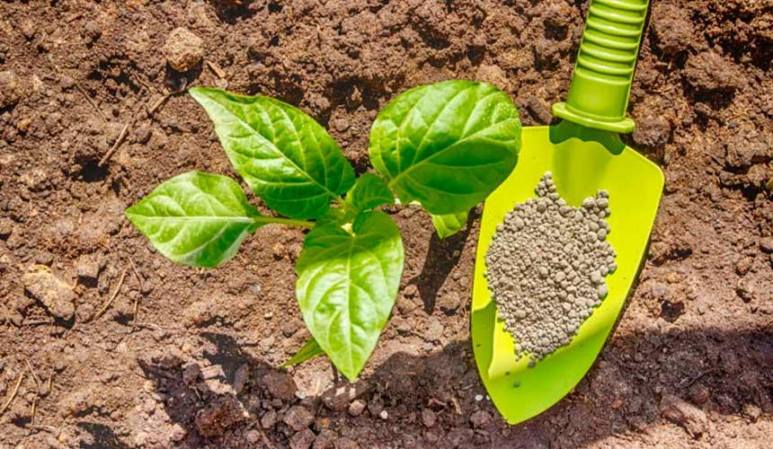 Мировой рынок фосфорных удобрений