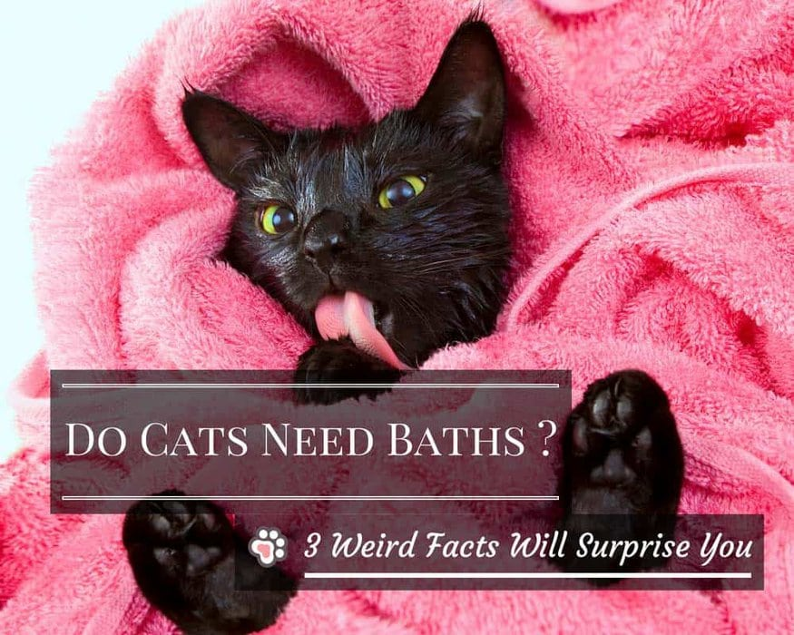 do cats need baths