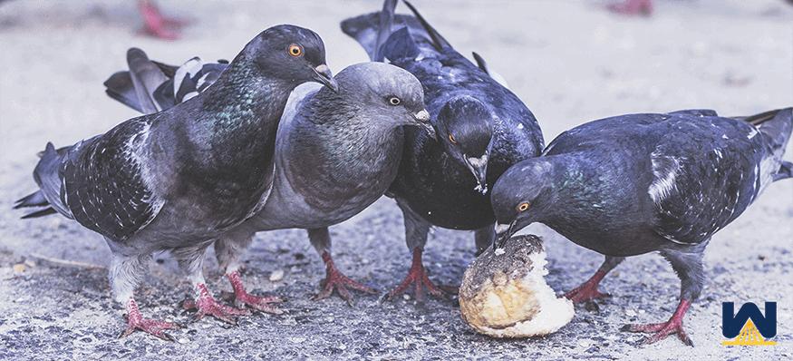 birds-pecking-spray-foam-on-a-roof