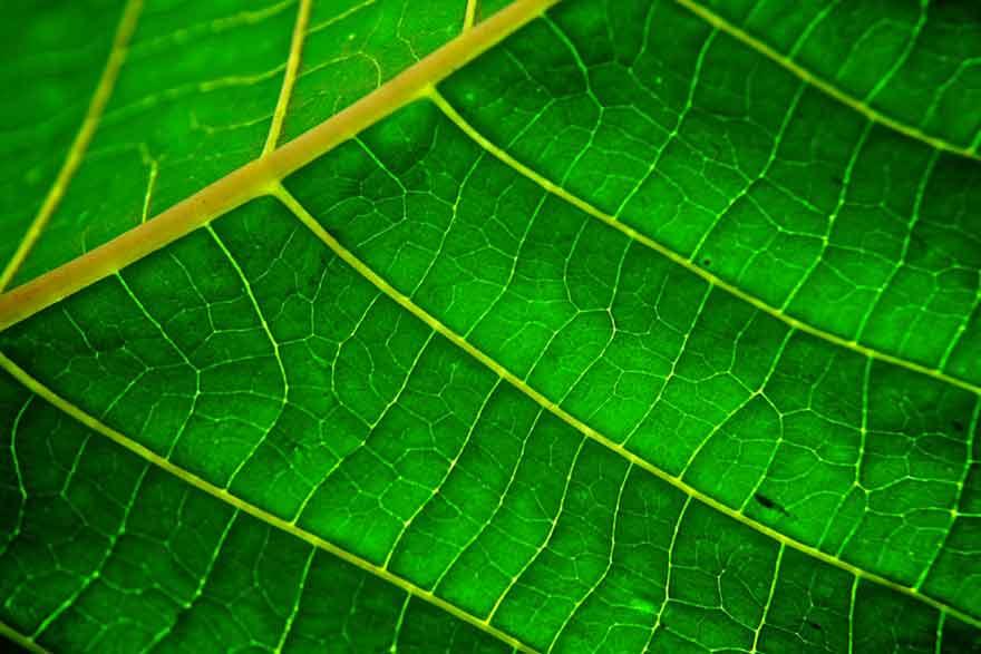 Plante modifiée génétiquement