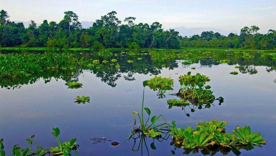 Lechugas de agua en Bocas del Polochic