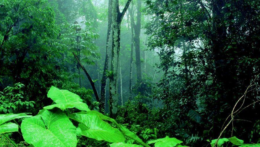 Exuberante vegetación en Cerro San Gil