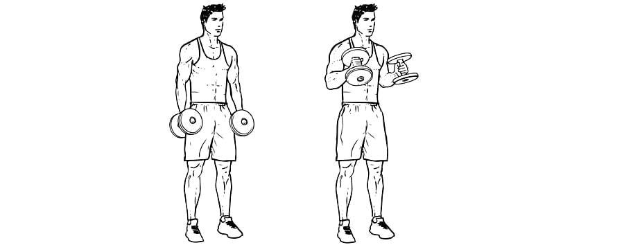 Exercícios para antebraços Rosca Martelo