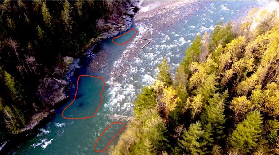 Where Bull Trout Live