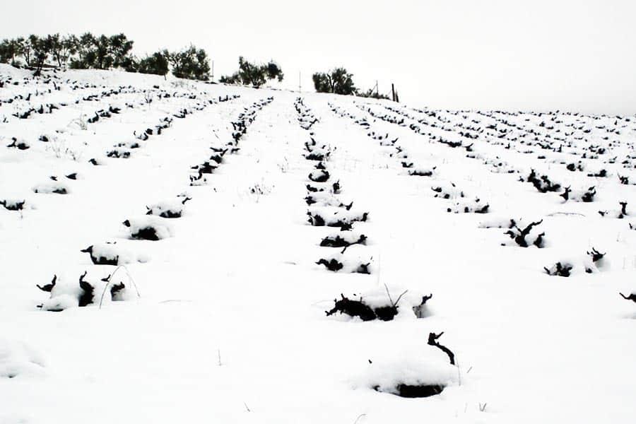 Viñas Nevadas en Bodegas Gómez Nevado