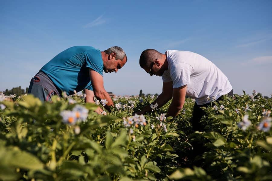 Fotografo reportage industriale agricoltura campi irrigazione a goccia coltivazioni