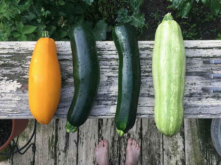 varieties of zucchini