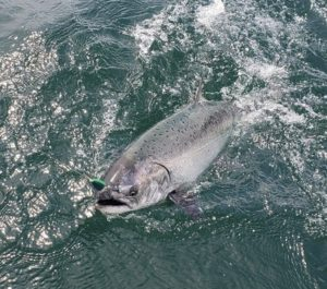 Vancouver salmon fishing report June