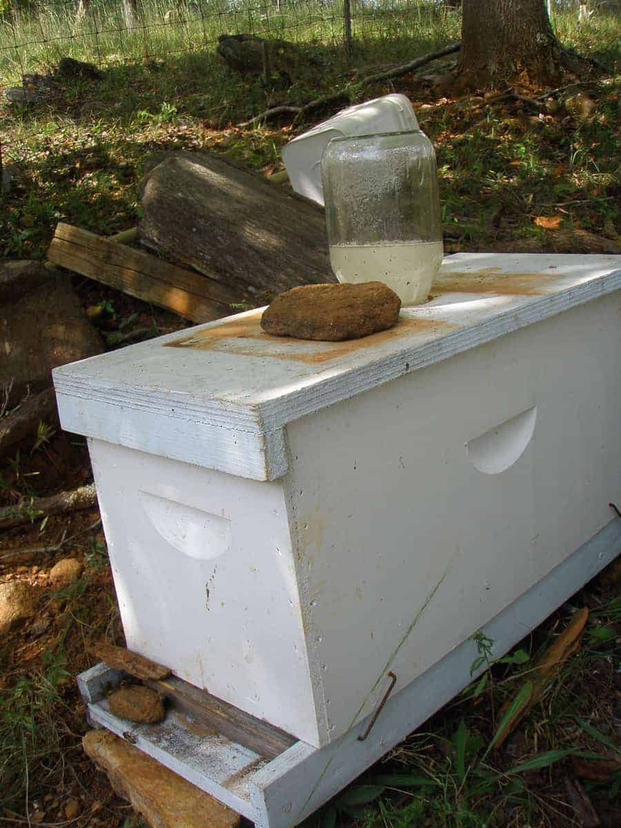 Do bees swarm in Fall. Yes and they need fed. Carolina Honeybees
