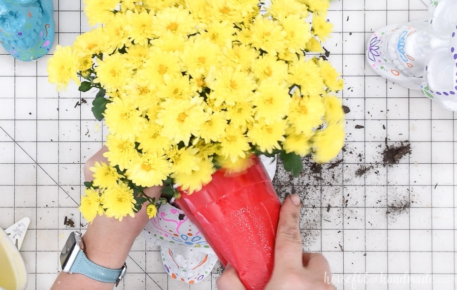 Yellow mums being planted in the hole on the top of the sugar skull planter.