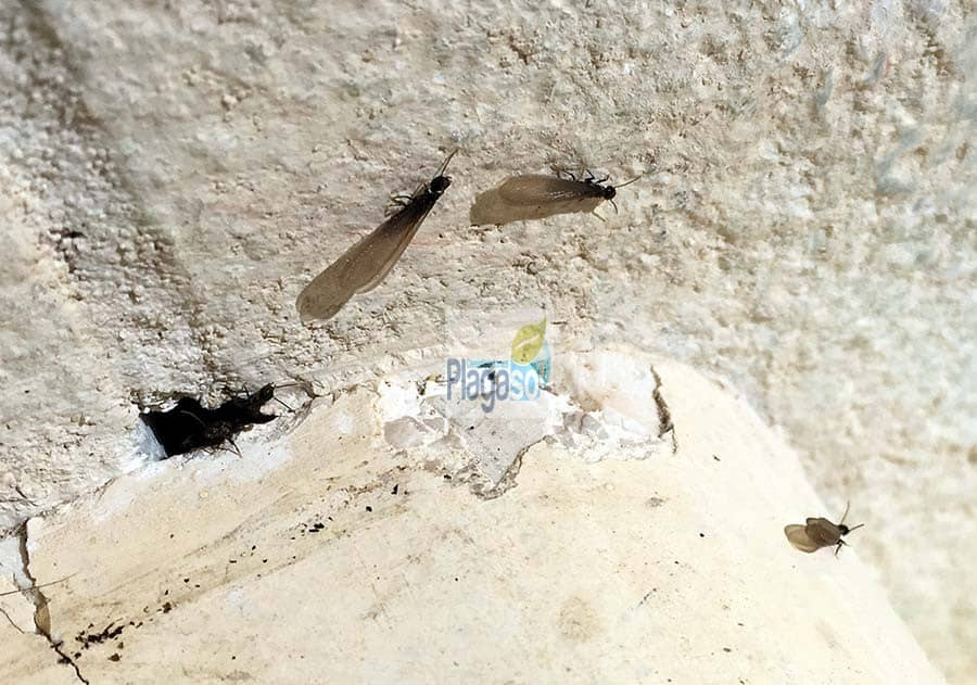 termitas en hormigón