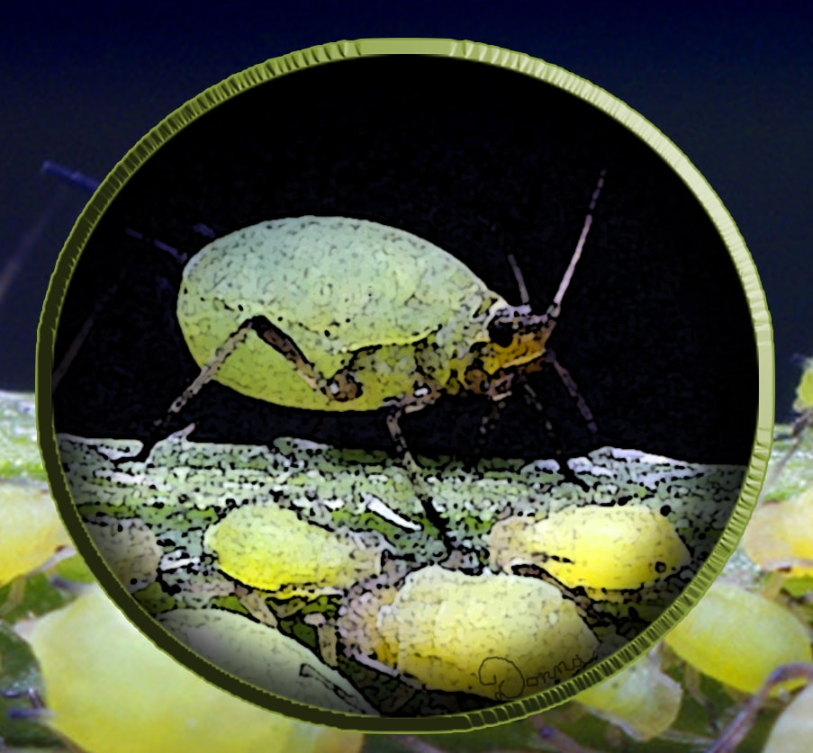 Hearts offers free landscape inspections for aphids and other garden pests.