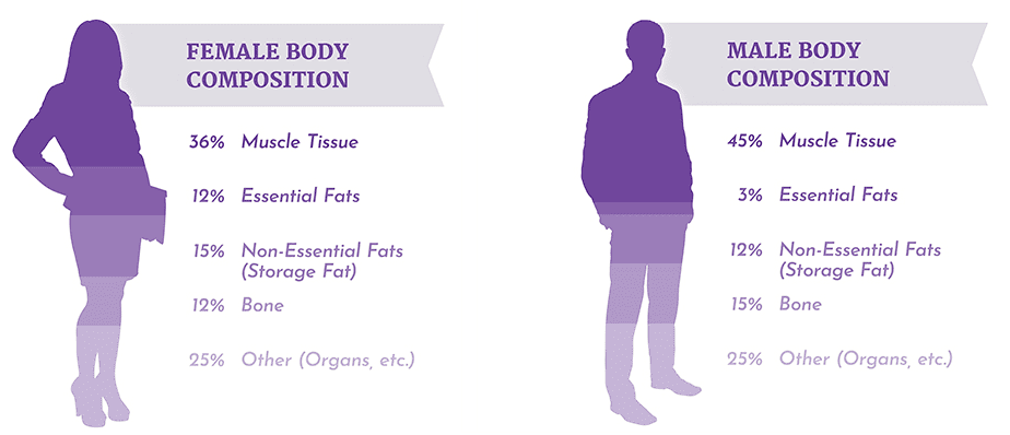 illustration of female and male body composition