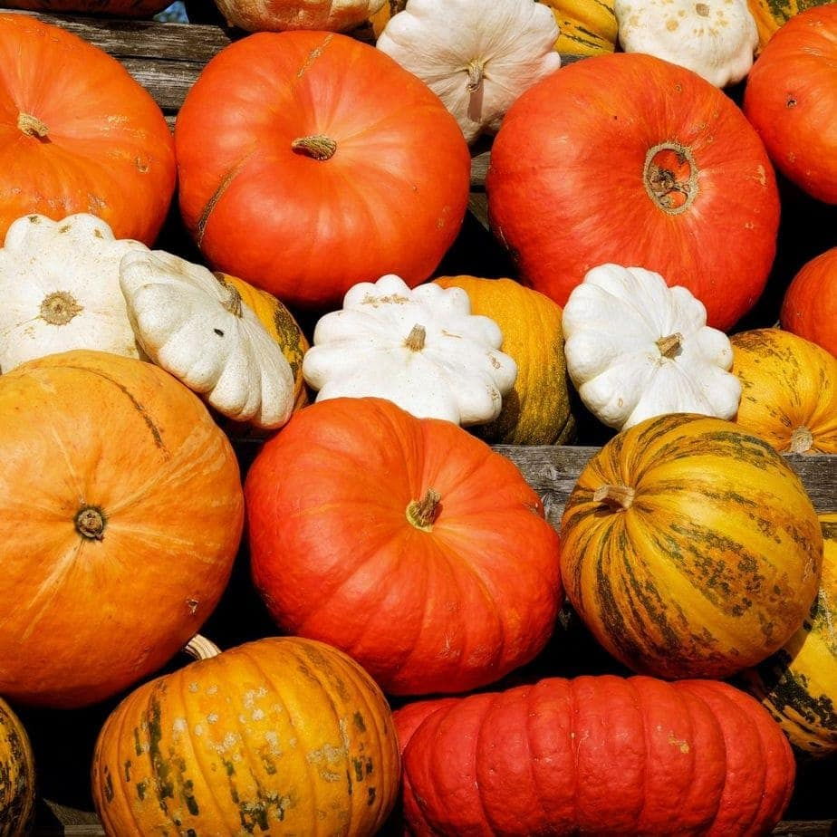 Different type of pumpkin you can use for pumpkin pie