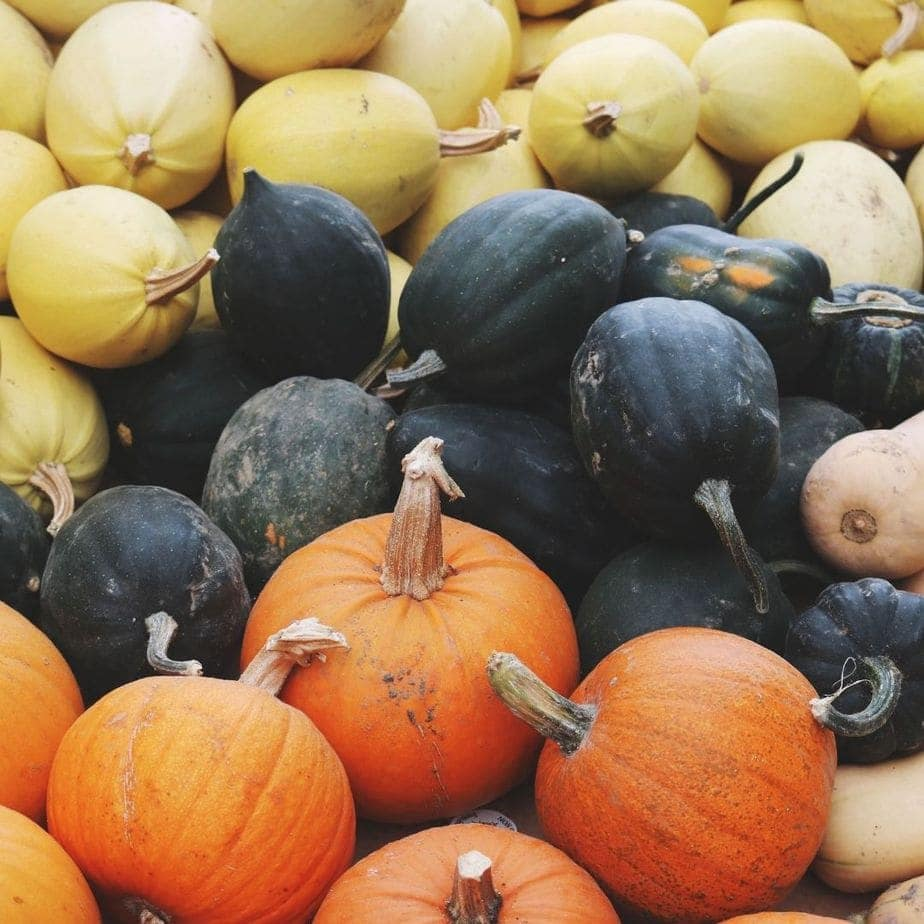 Different types of pumpkin and squashes for pumpkin pie