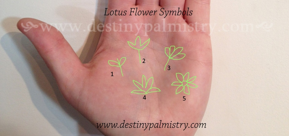 Lotus Flower Symbol Indian Palmistry Destiny Palmistry