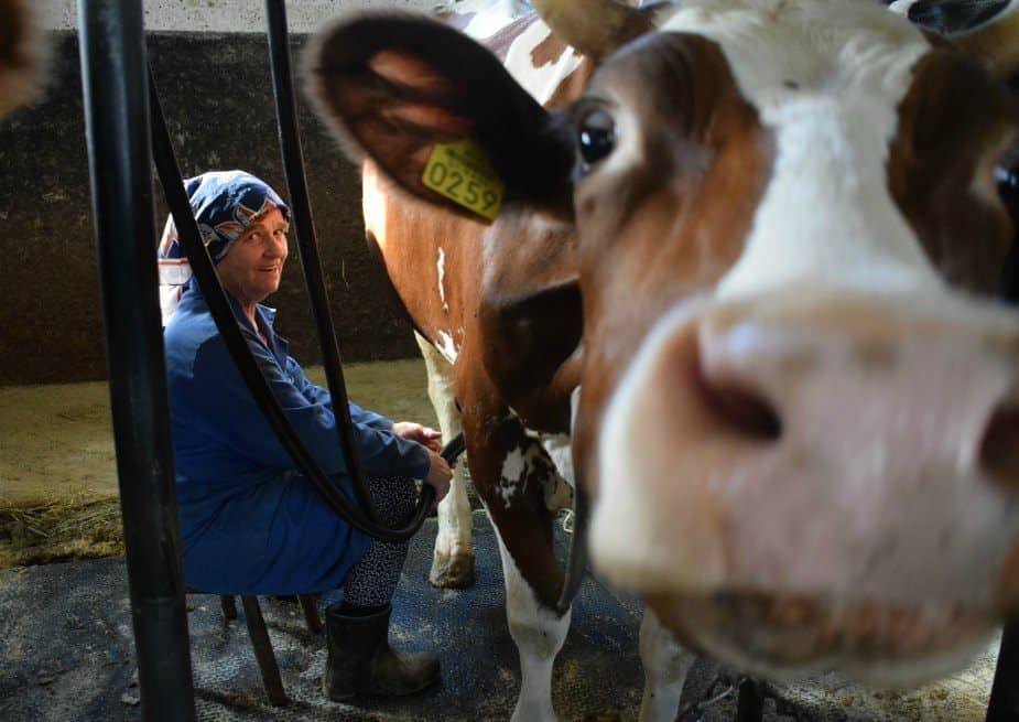 Airbnb Slovenia Happy Cow