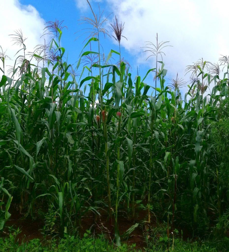 La población vive fundamentalmente de la agricultura