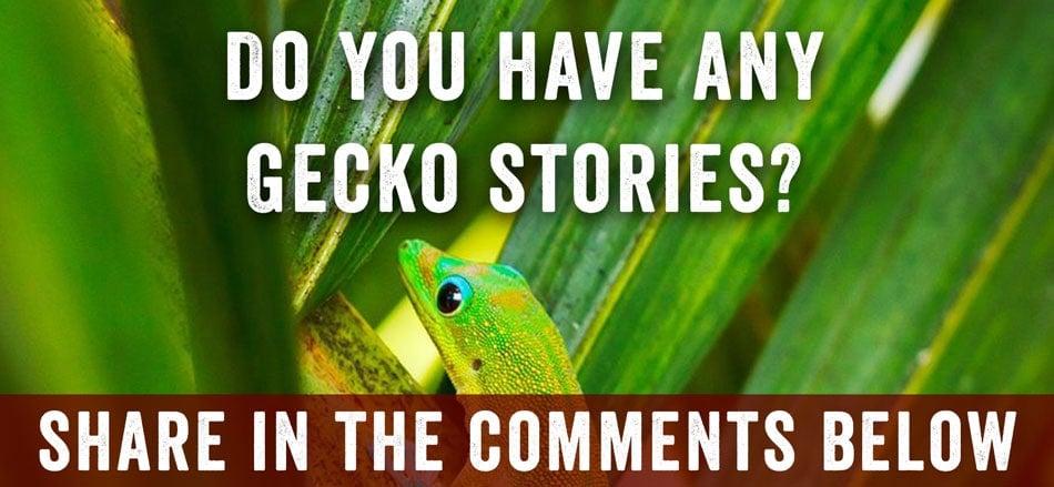 geckos comments