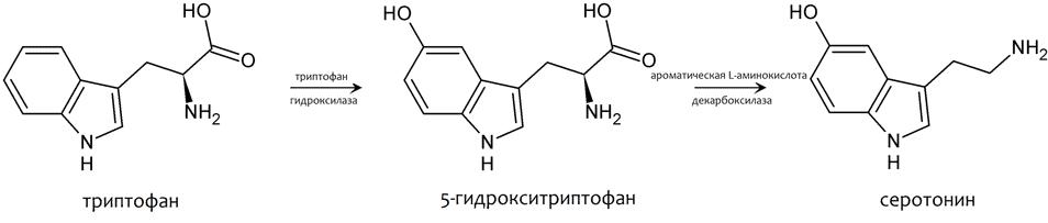 Серотонин и мелатонин