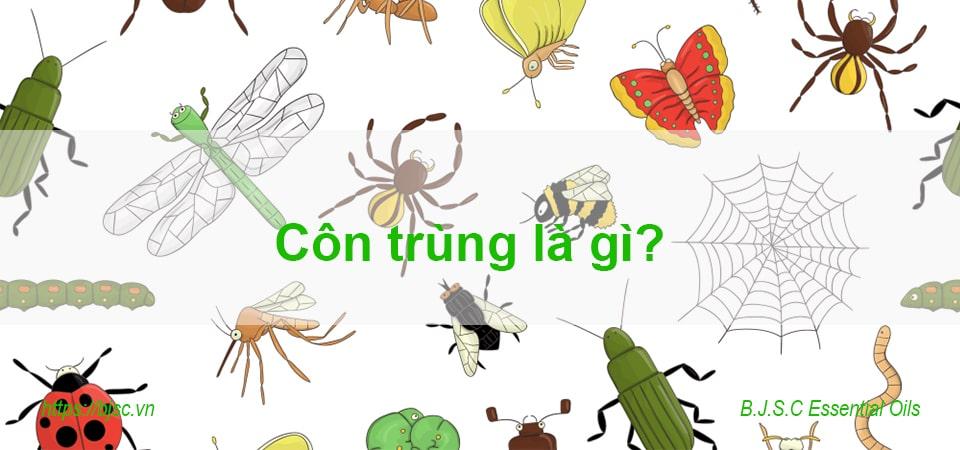 côn trùng là gì