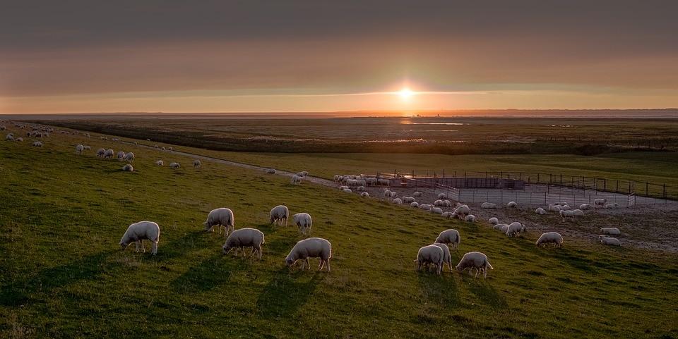 Weidetierversicherung Weidetier Versicherung Schafe Lama Alpaka Kuh Rind Weidezaungerät Nutztierversicherung