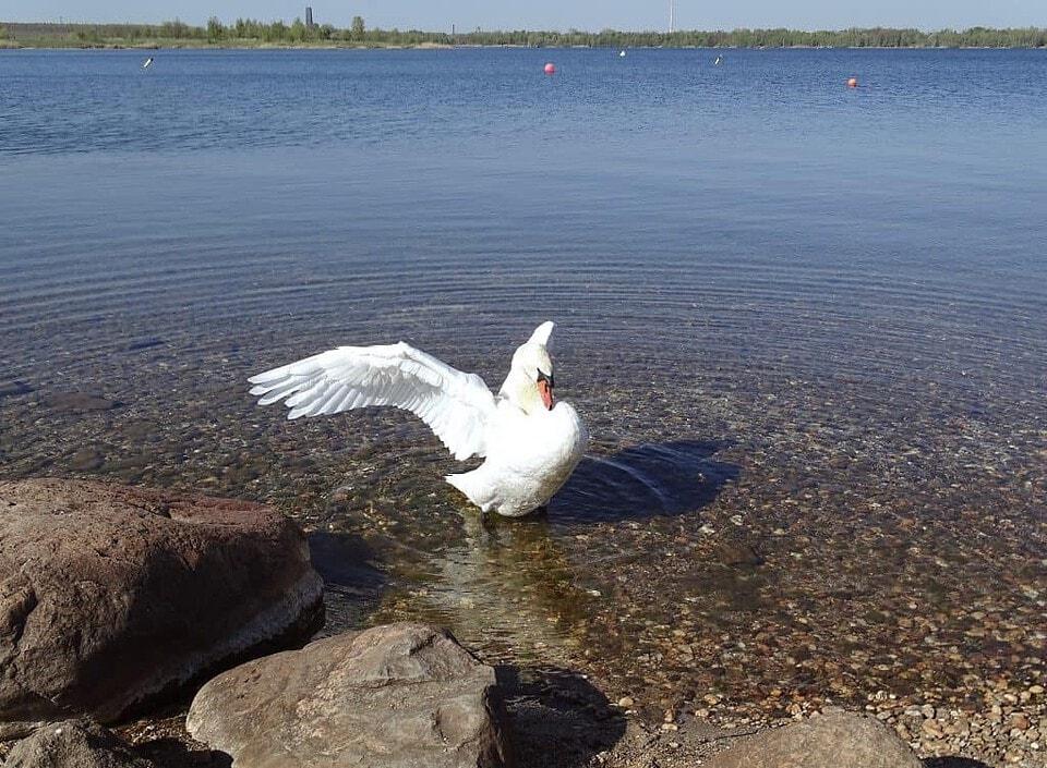 Baden im Cospudener See - einer der schönsten Badeseen Deutschlands