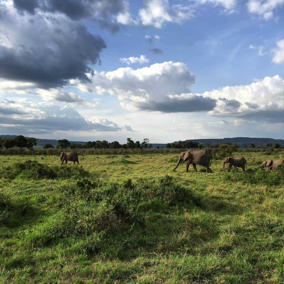 Four Tips for Choosing a Sustainable Safari Camp