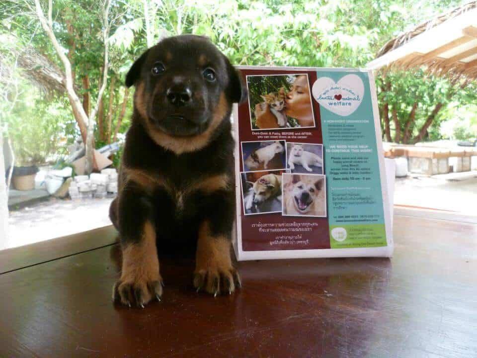 A puppy at Lanta Animal Welfare