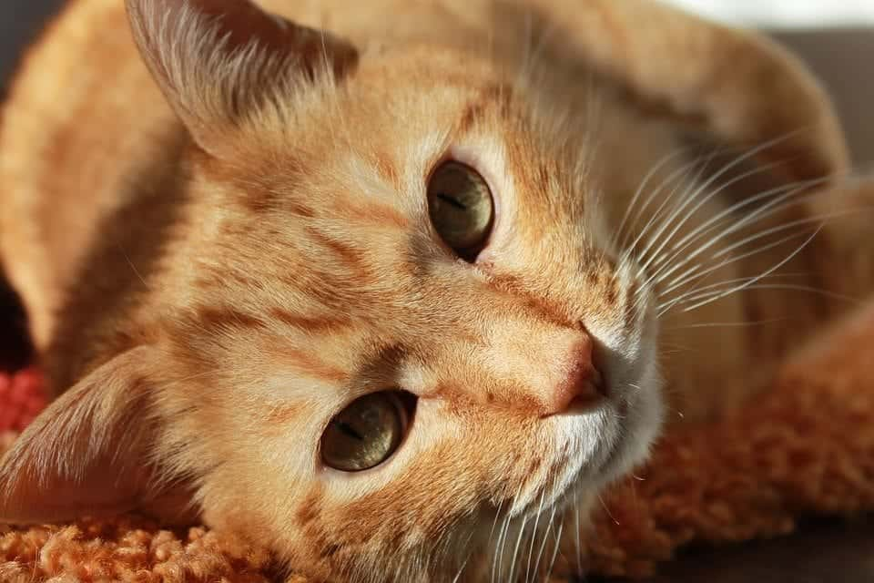 free veterinary care washington