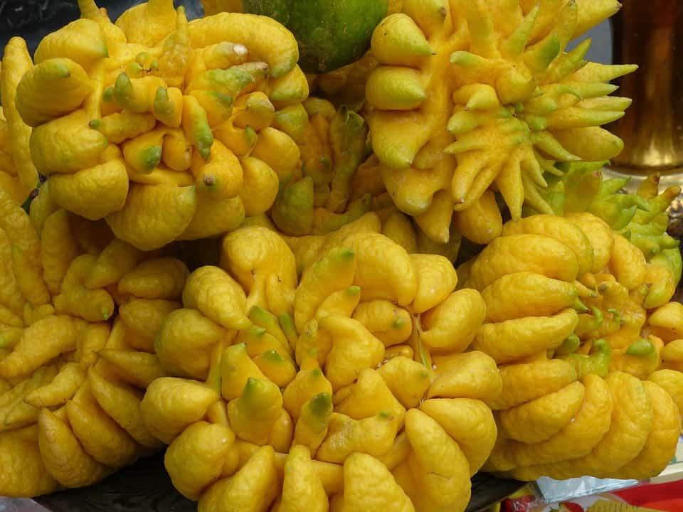 buddha s hand weird exotic fruits