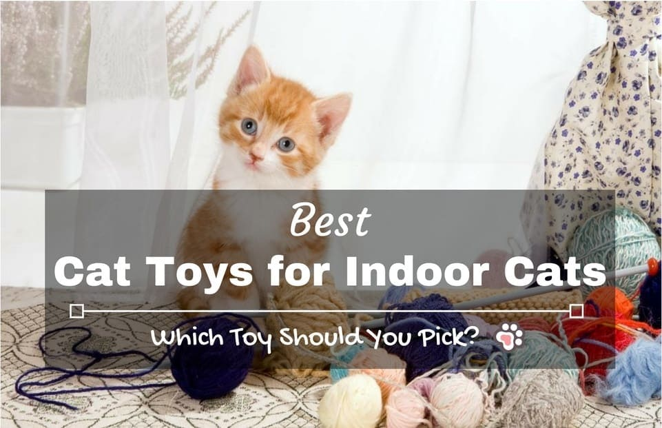 Best Cat Toys for Indoor Cats: Which Toy Should You Pick?