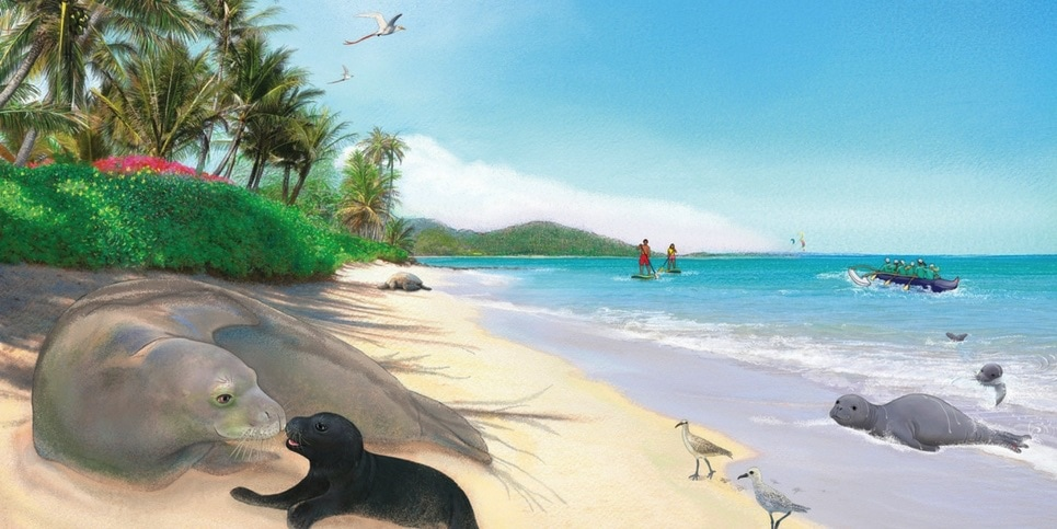 Honey Girl- The Hawaiian Monk Seal, by Jeanne Walker Harvey Book Trailer