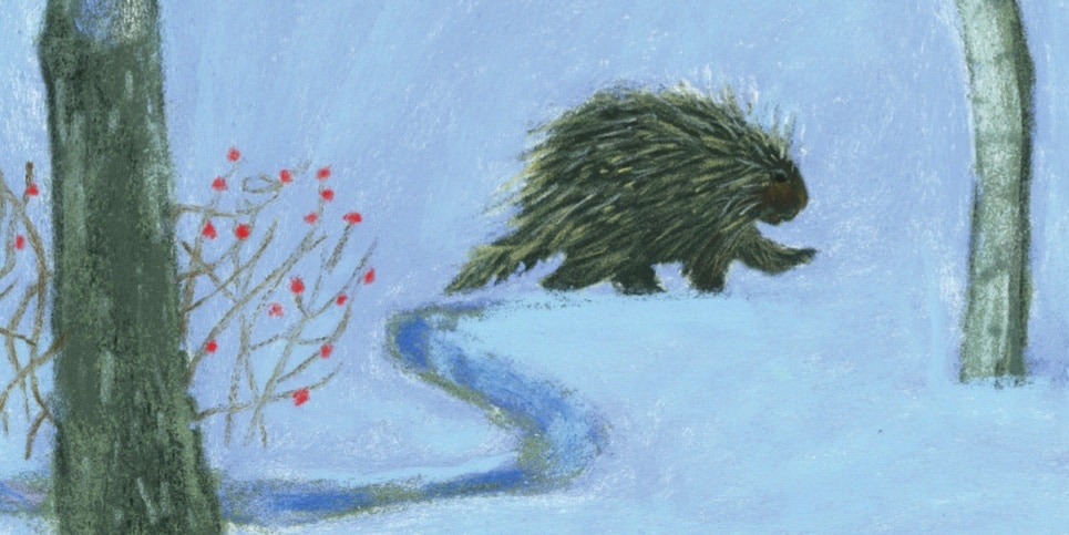 A Porcupines Promenade by Lyn Smith Book Review