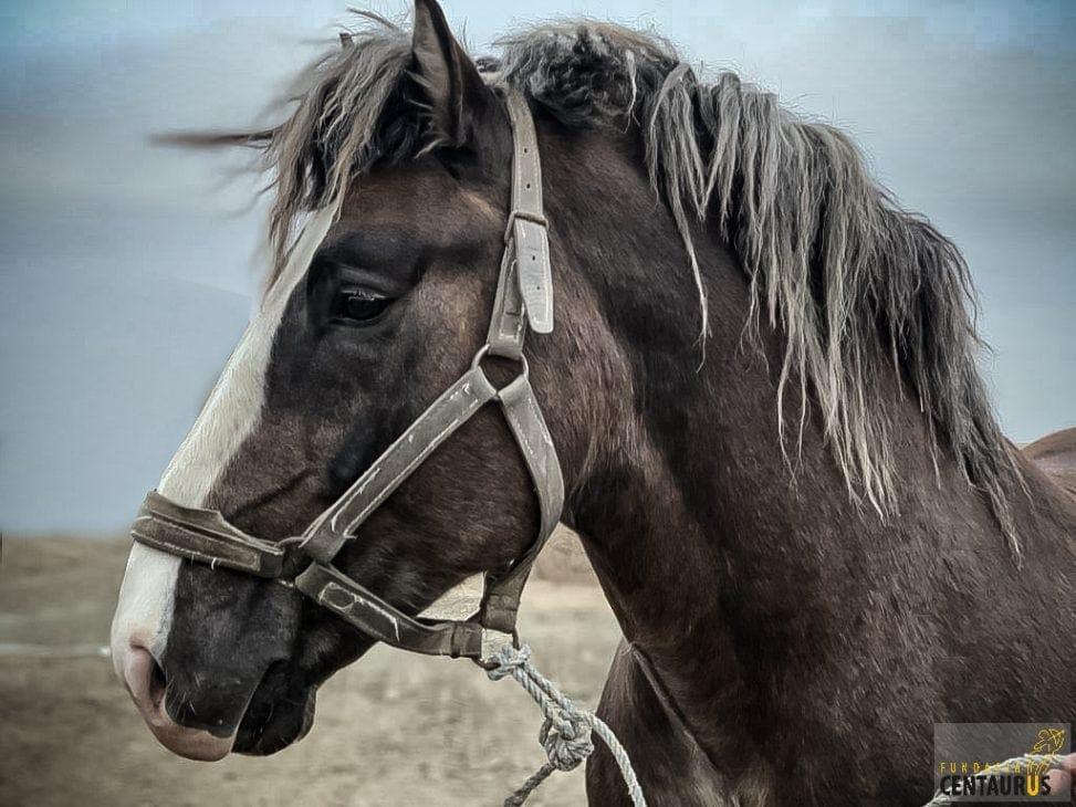 akcja charytatywna - pomóż uratować konia jago