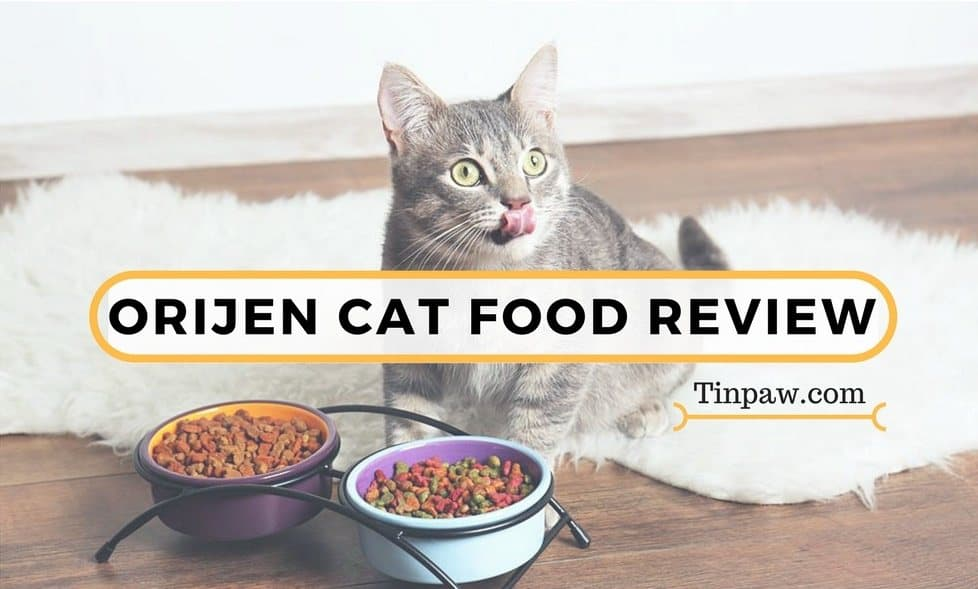 Orijen Cat Food Review: What You Need To Know About the Cat & Kitten Formula