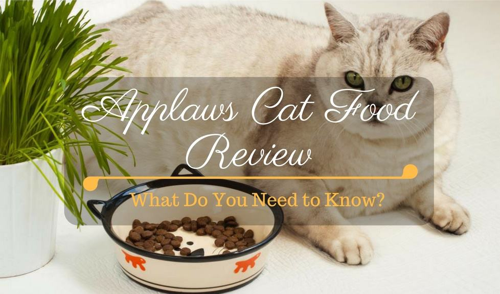 Applaws Cat Food Review: What Do You Need to Know About This Brand?