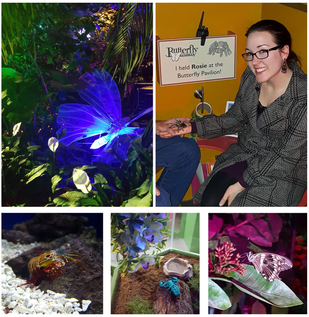 Images in the Butterfly Pavilion and Brooke holding Rosie the Tarantula