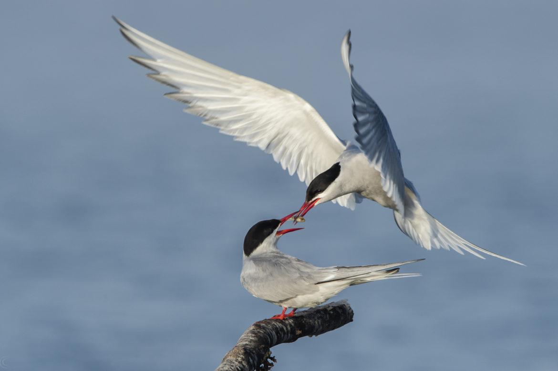 Diverse Vögel