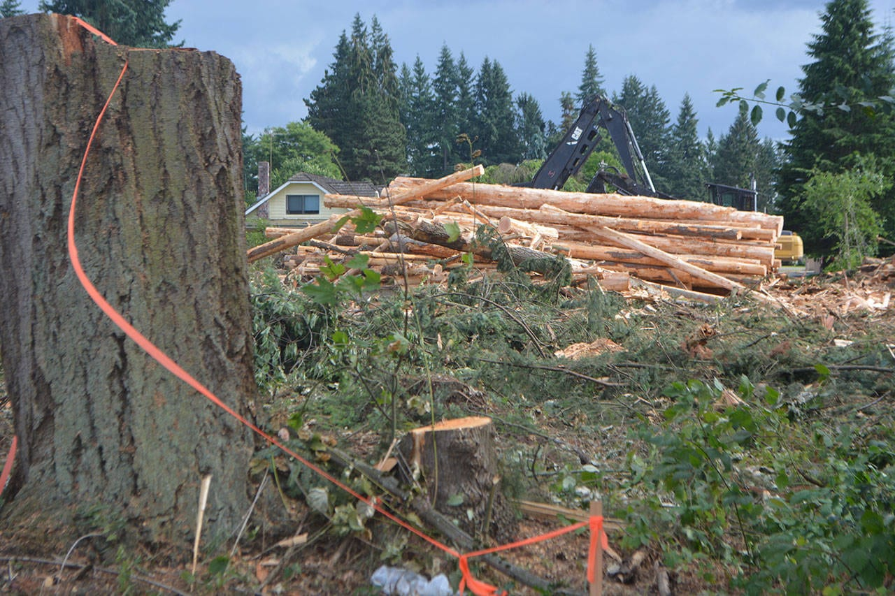 Steve Powell/Staff Photo                                  The trees came down quickly this week at Spook Woods in Marysville.
