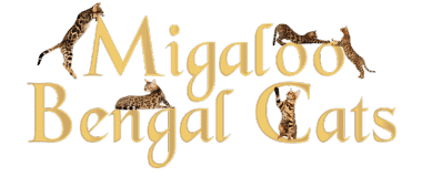 Bengal Kittens for sale in Queenland | Migaloo Bengal Cats