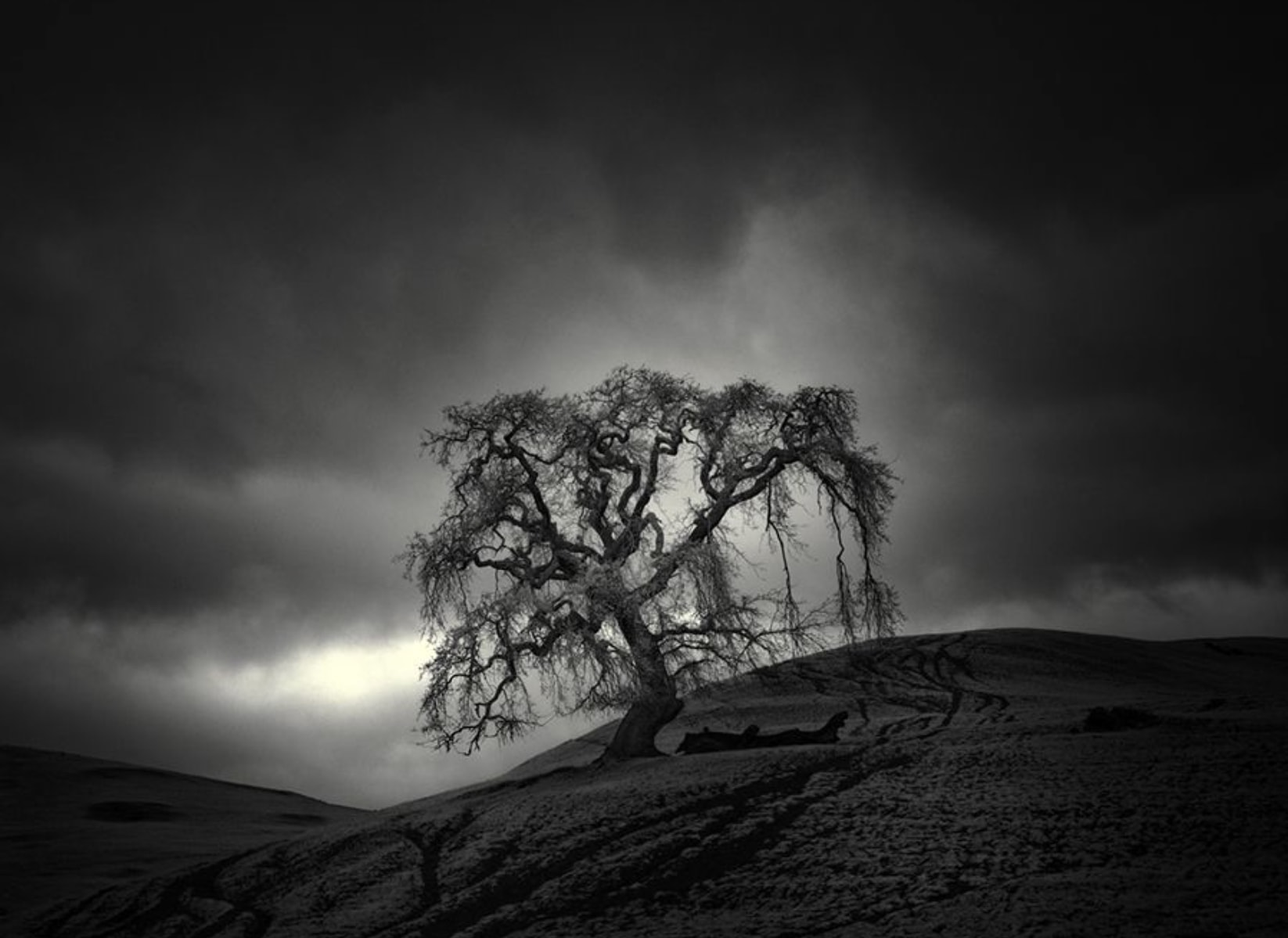 Photograph by Nathan Wirth   Follow Nathan on Facebook  - Instagram