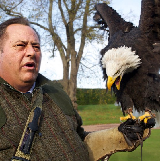 Falconry Display in Scotland with eagle